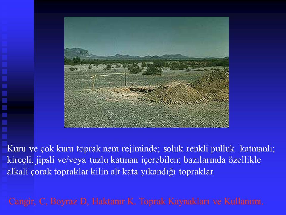 Kuru ve çok kuru toprak nem rejiminde; soluk renkli pulluk katmanlı; kireçli, jipsli ve/veya tuzlu katman içerebilen; bazılarında özellikle alkali çorak topraklar kilin alt kata yıkandığı topraklar.