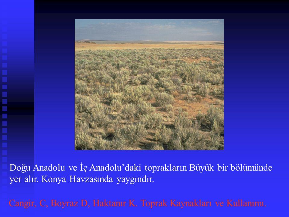 Doğu Anadolu ve İç Anadolu'daki toprakların Büyük bir bölümünde yer alır. Konya Havzasında yaygındır.