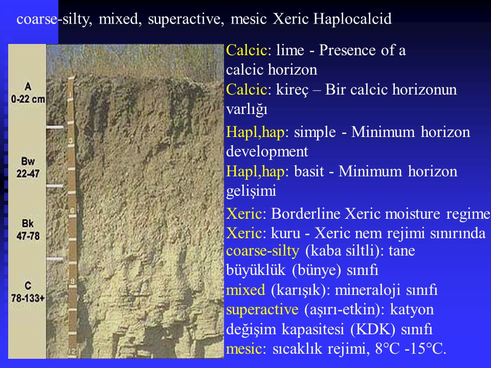 coarse-silty, mixed, superactive, mesic Xeric Haplocalcid