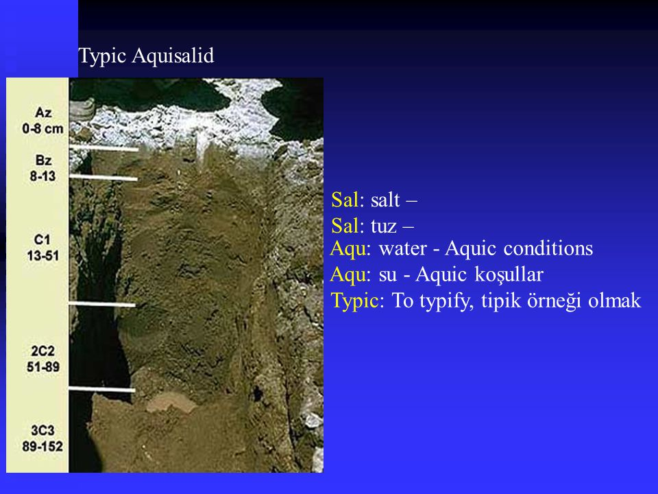 Typic Aquisalid Sal: salt – Sal: tuz – Aqu: water - Aquic conditions.