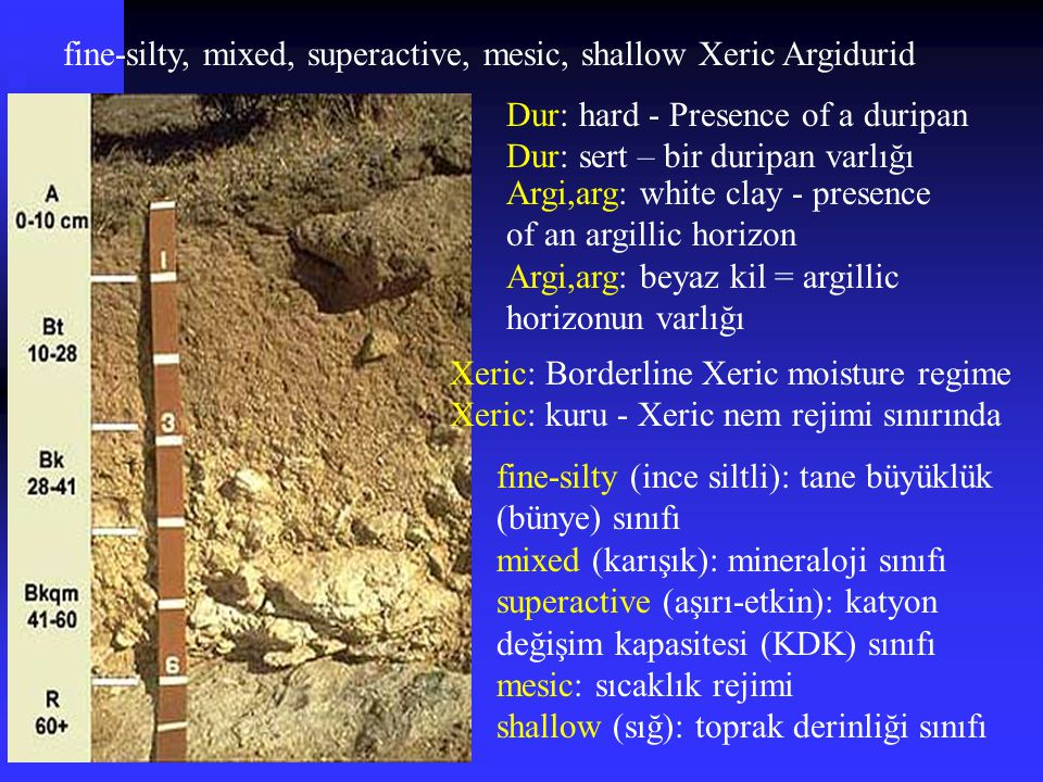 fine-silty, mixed, superactive, mesic, shallow Xeric Argidurid