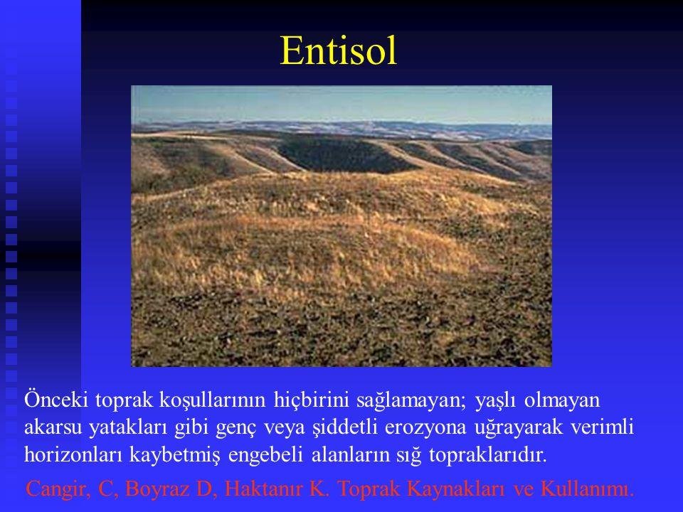 Entisol