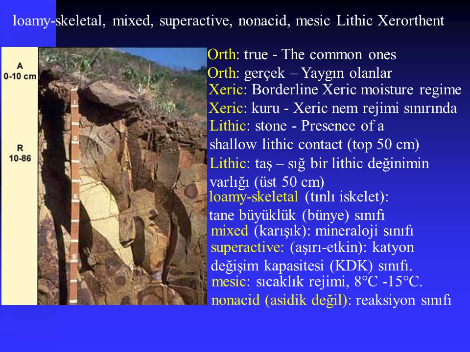 loamy-skeletal, mixed, superactive, nonacid, mesic Lithic Xerorthent