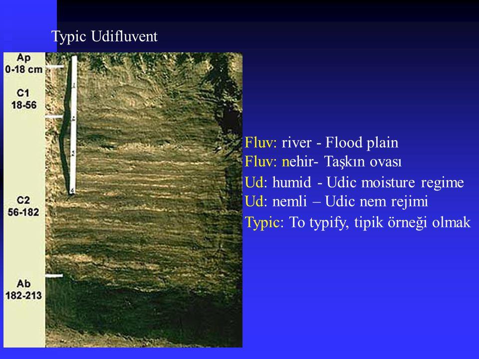 Typic Udifluvent Fluv: river - Flood plain. Fluv: nehir- Taşkın ovası. Ud: humid - Udic moisture regime.
