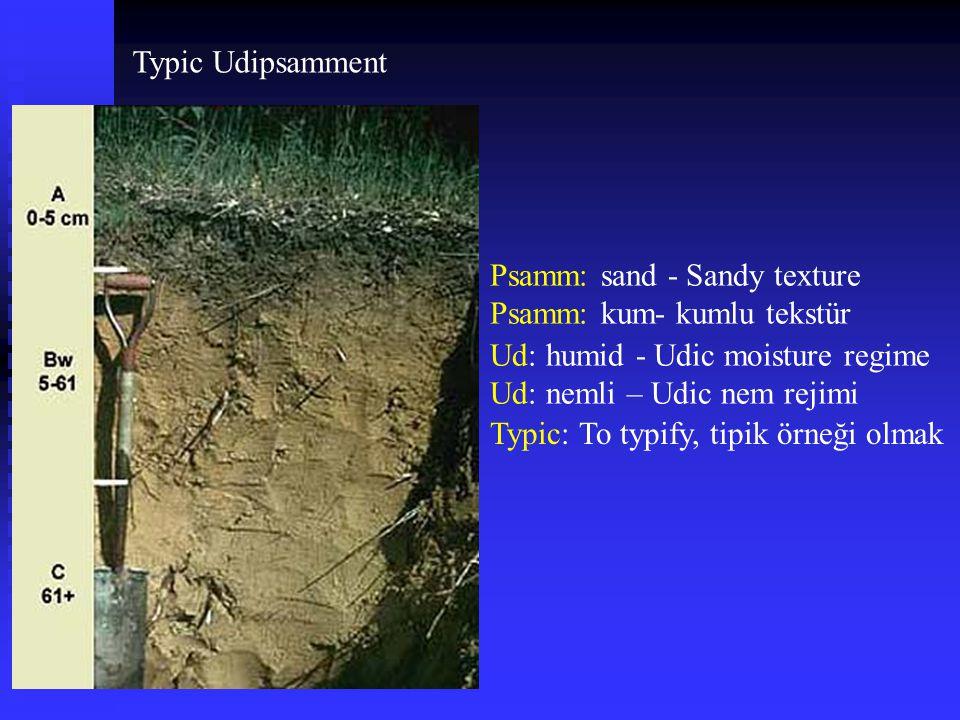 Typic Udipsamment Psamm: sand - Sandy texture. Psamm: kum- kumlu tekstür. Ud: humid - Udic moisture regime.