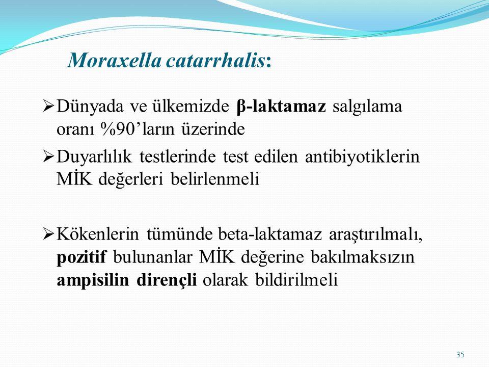 Moraxella catarrhalis: