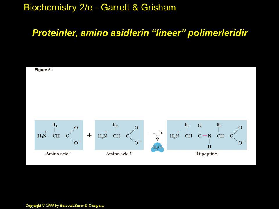 Proteinler, amino asidlerin lineer polimerleridir