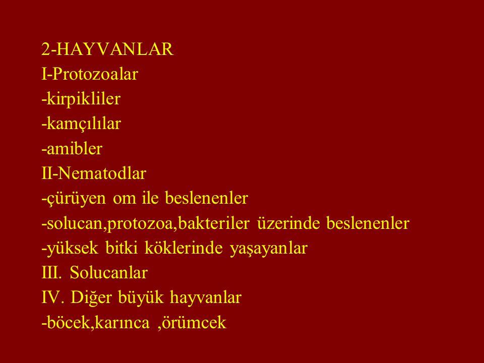 2-HAYVANLAR I-Protozoalar. -kirpikliler. -kamçılılar. -amibler. II-Nematodlar. -çürüyen om ile beslenenler.