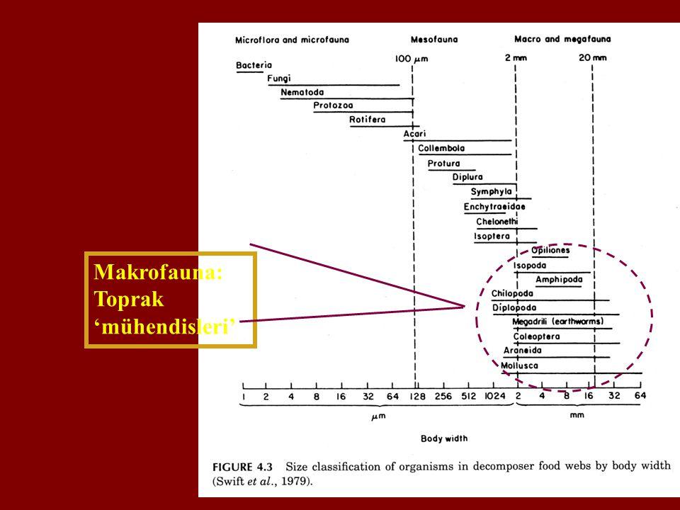 Makrofauna: Toprak 'mühendisleri'
