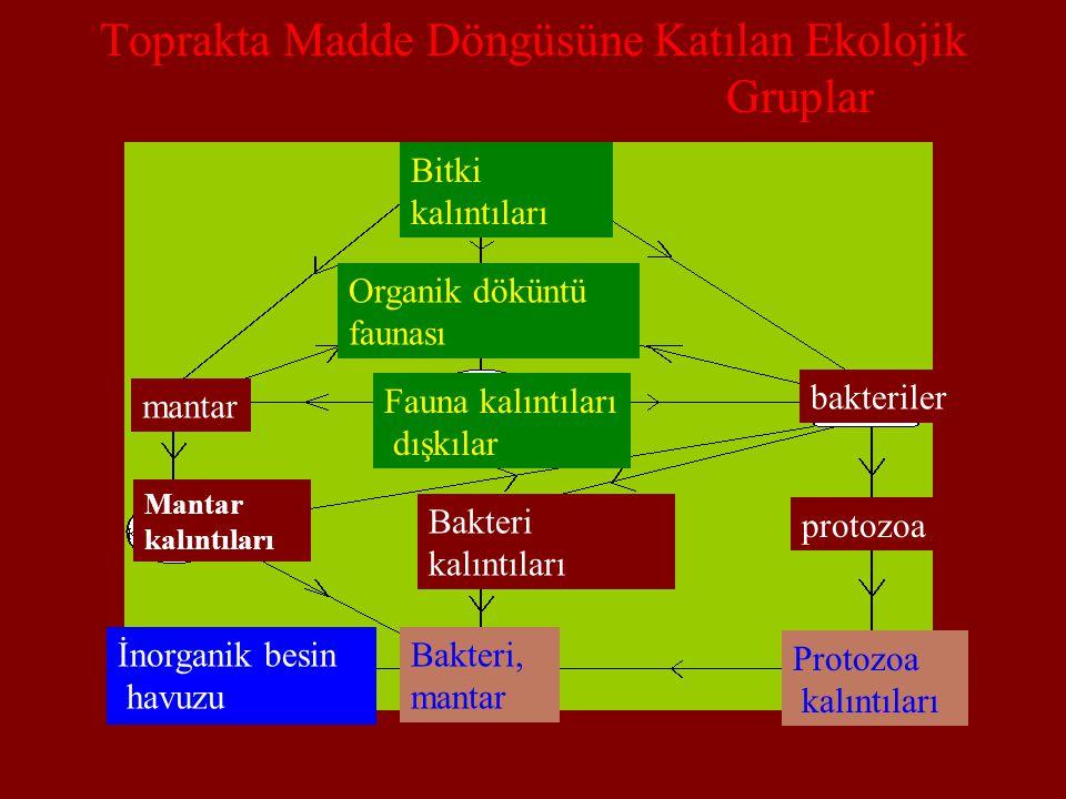 Toprakta Madde Döngüsüne Katılan Ekolojik Gruplar