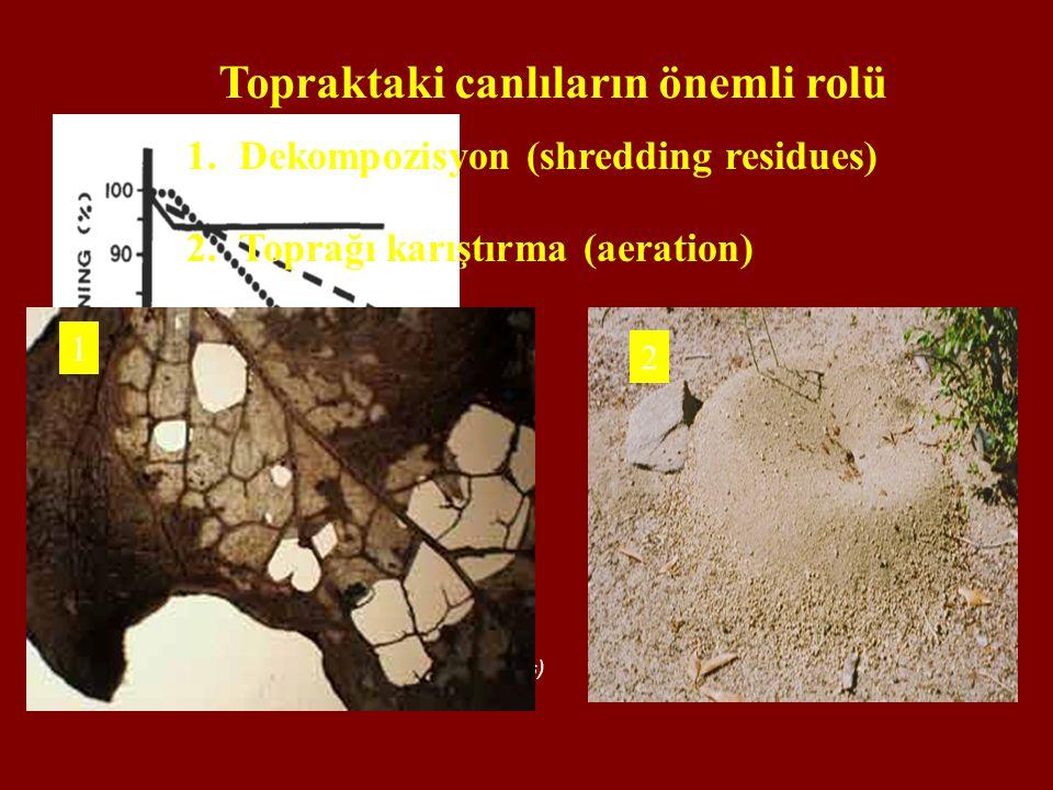 Topraktaki canlıların önemli rolü