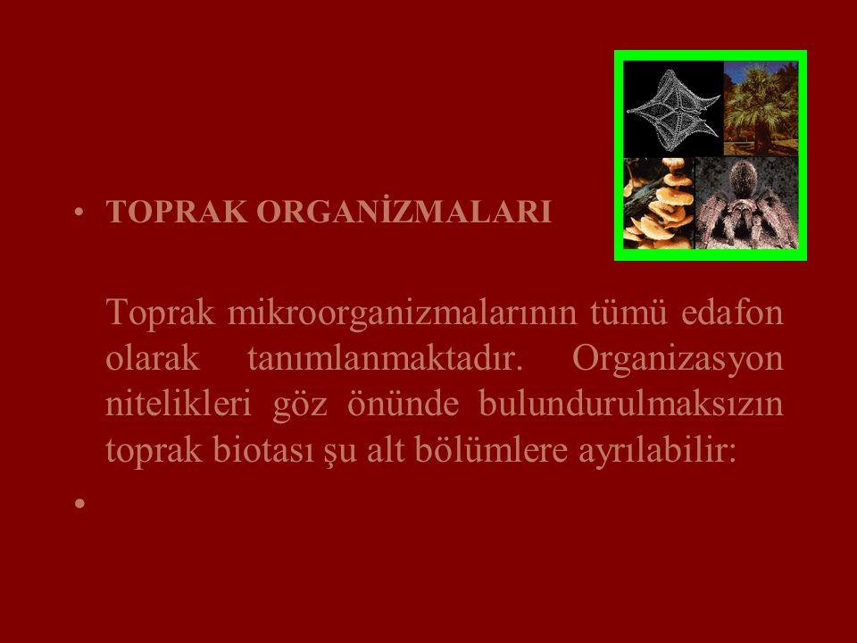 TOPRAK ORGANİZMALARI