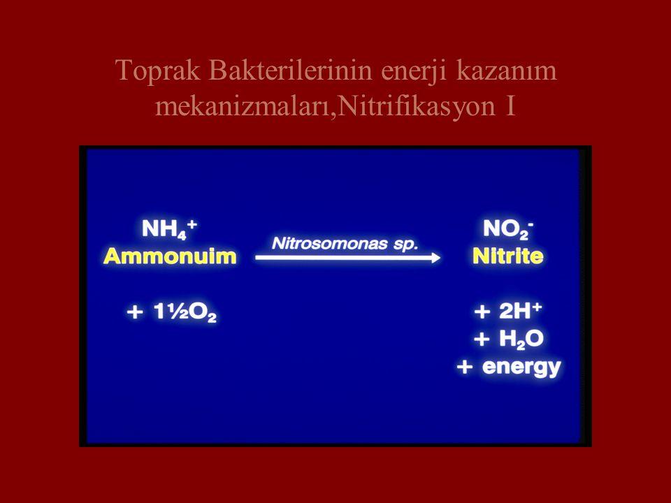 Toprak Bakterilerinin enerji kazanım mekanizmaları,Nitrifikasyon I
