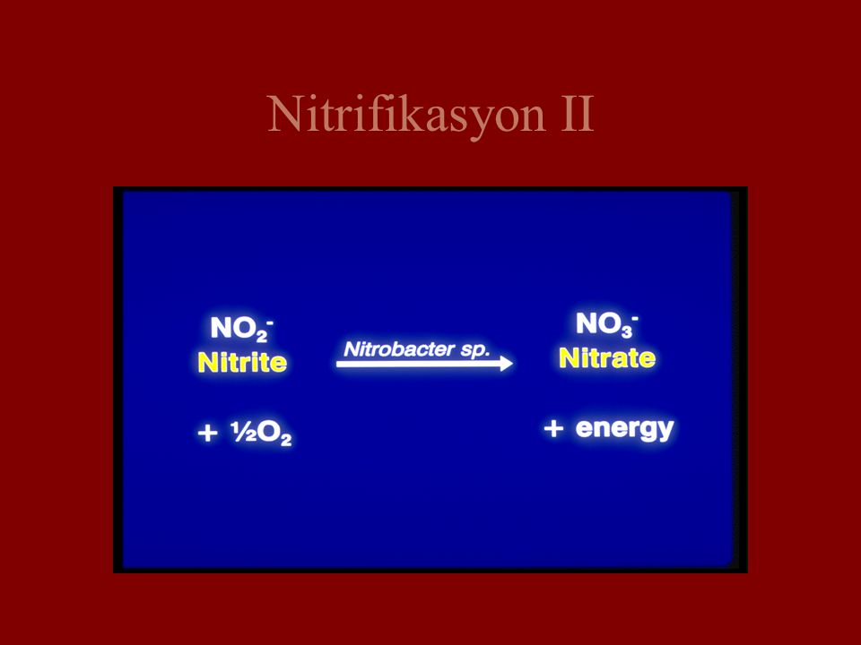 Nitrifikasyon II