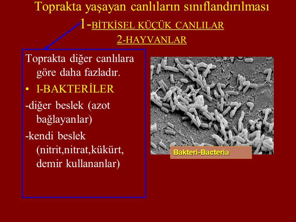 Toprakta yaşayan canlıların sınıflandırılması 1-BİTKİSEL KÜÇÜK CANLILAR 2-HAYVANLAR