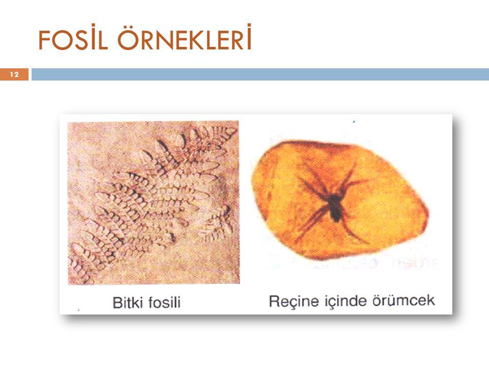 FOSİL ÖRNEKLERİ