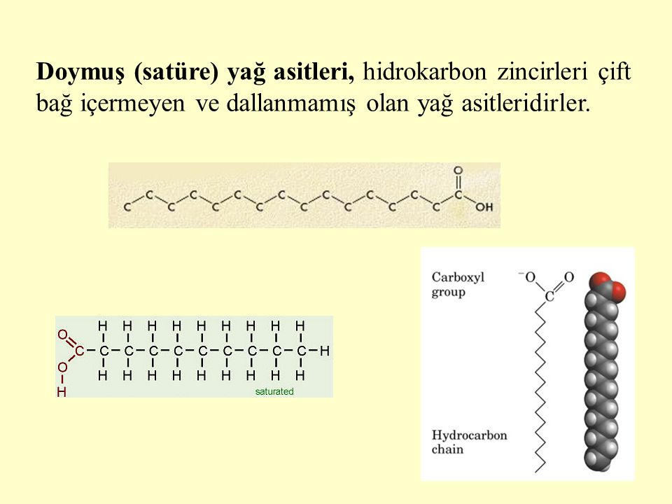 Doymuş (satüre) yağ asitleri, hidrokarbon zincirleri çift bağ içermeyen ve dallanmamış olan yağ asitleridirler.