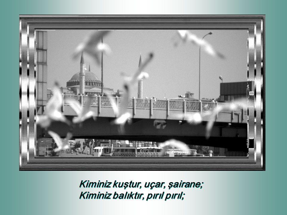 Kiminiz kuştur, uçar, şairane;