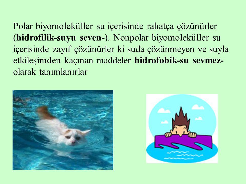 Polar biyomoleküller su içerisinde rahatça çözünürler (hidrofilik-suyu seven-).