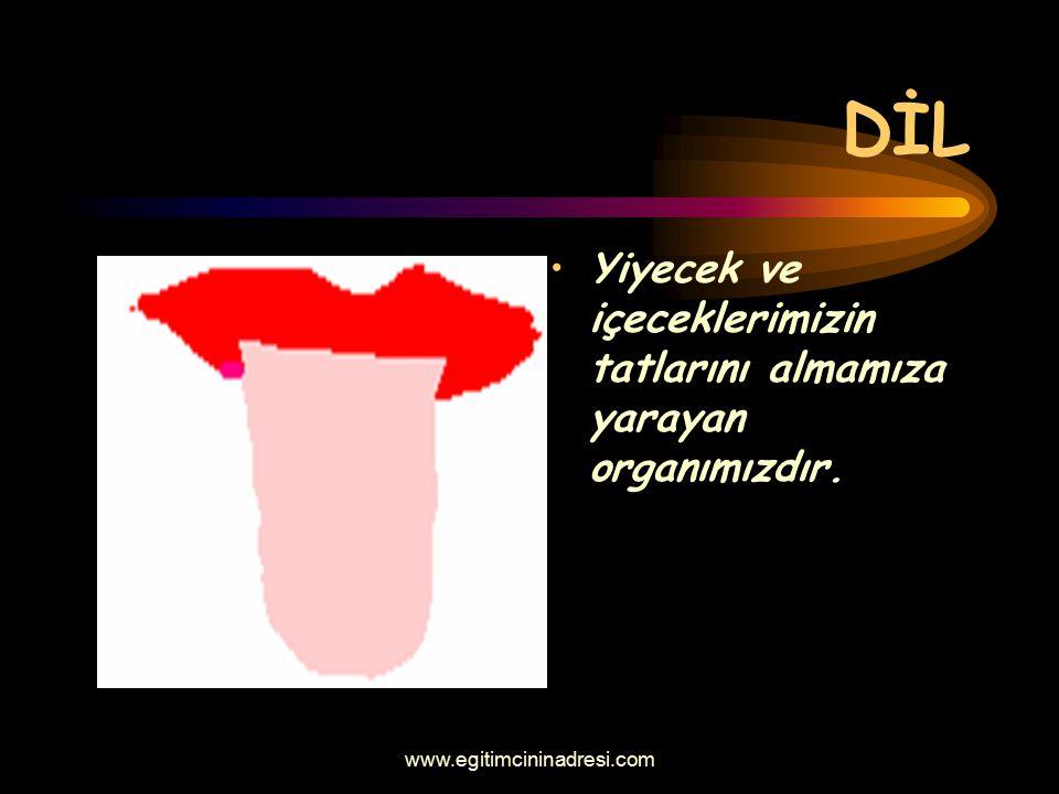 DİL Yiyecek ve içeceklerimizin tatlarını almamıza yarayan organımızdır. www.egitimcininadresi.com