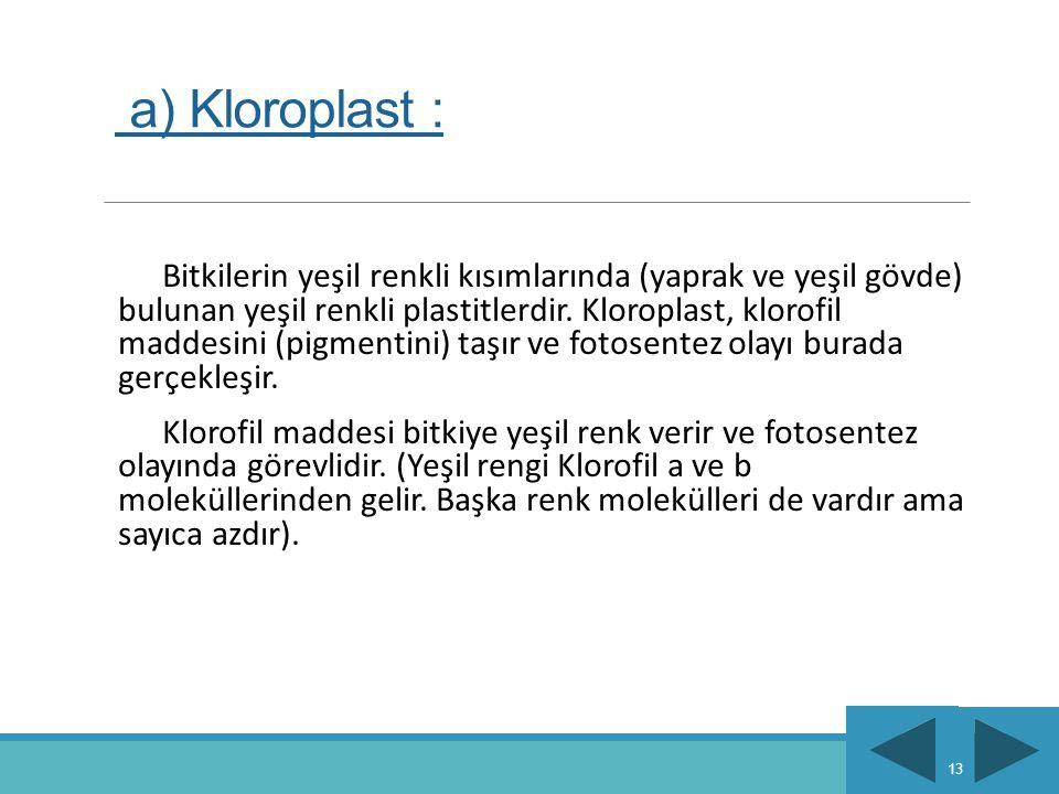 a) Kloroplast :
