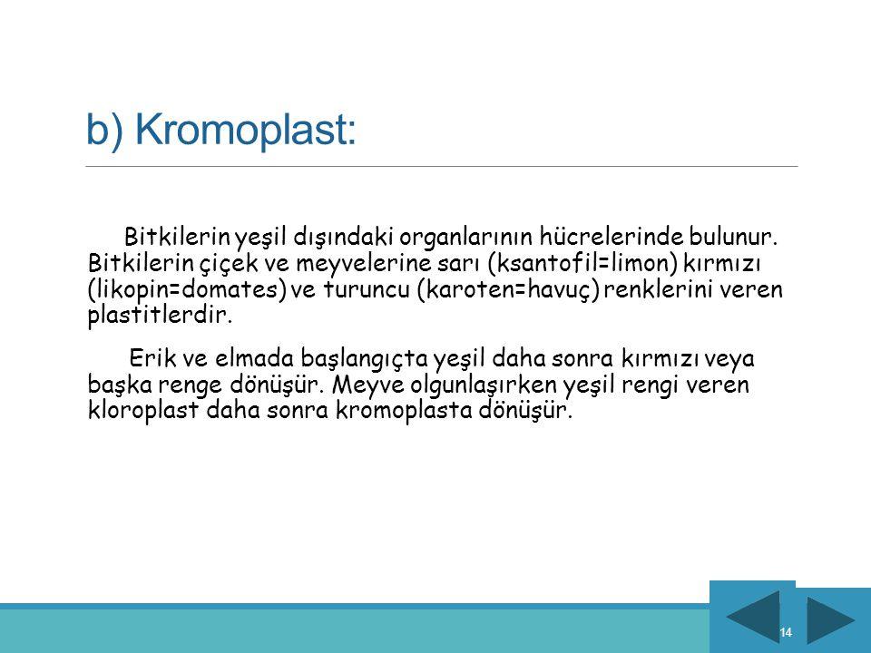 b) Kromoplast: