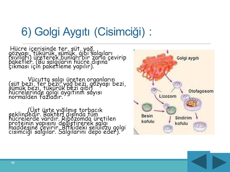 6) Golgi Aygıtı (Cisimciği) :