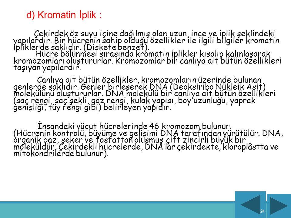 d) Kromatin İplik :