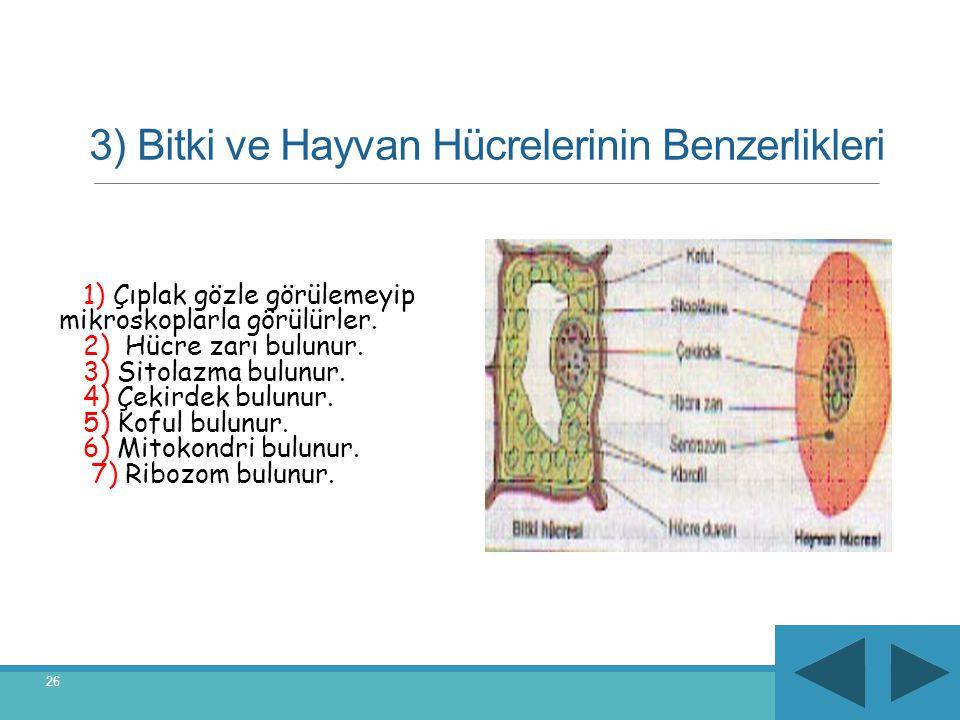 3) Bitki ve Hayvan Hücrelerinin Benzerlikleri