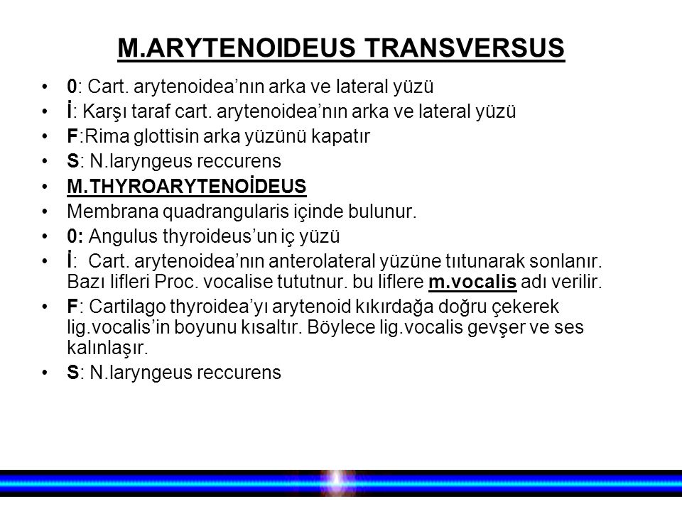 M.ARYTENOIDEUS TRANSVERSUS