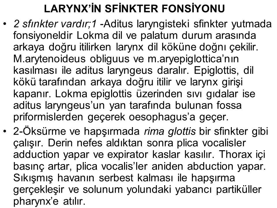 LARYNX'İN SFİNKTER FONSİYONU