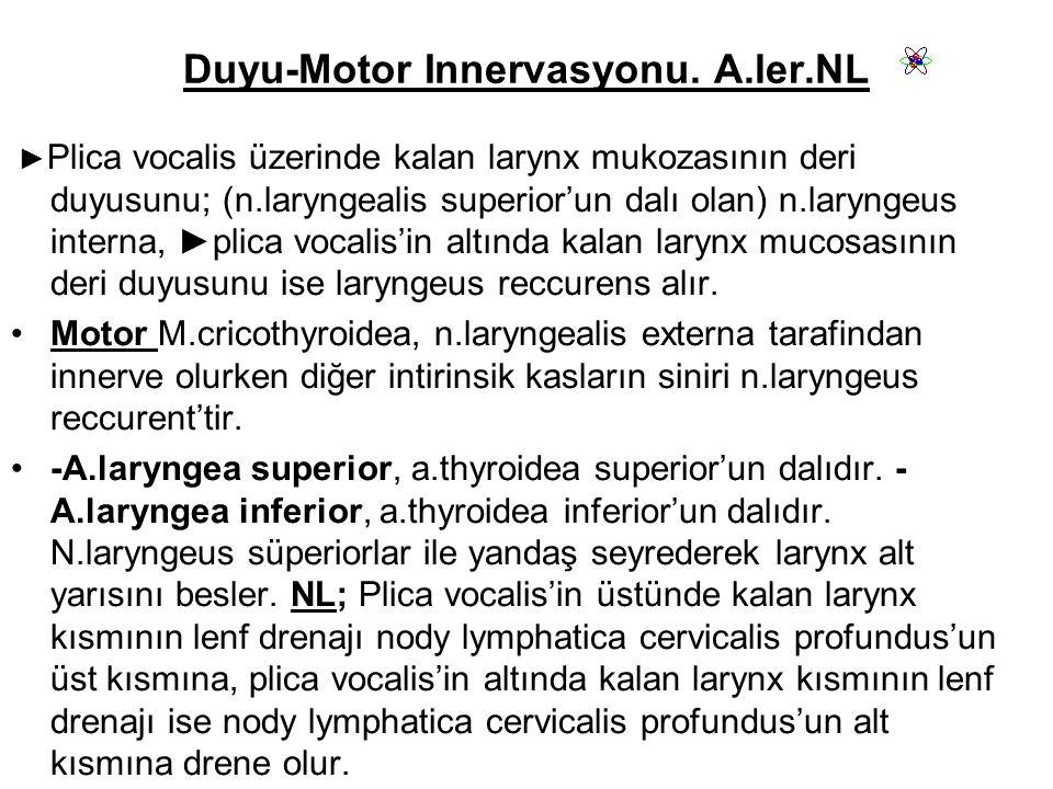 Duyu-Motor Innervasyonu. A.ler.NL
