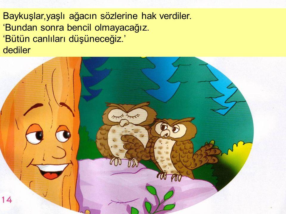 Baykuşlar,yaşlı ağacın sözlerine hak verdiler.