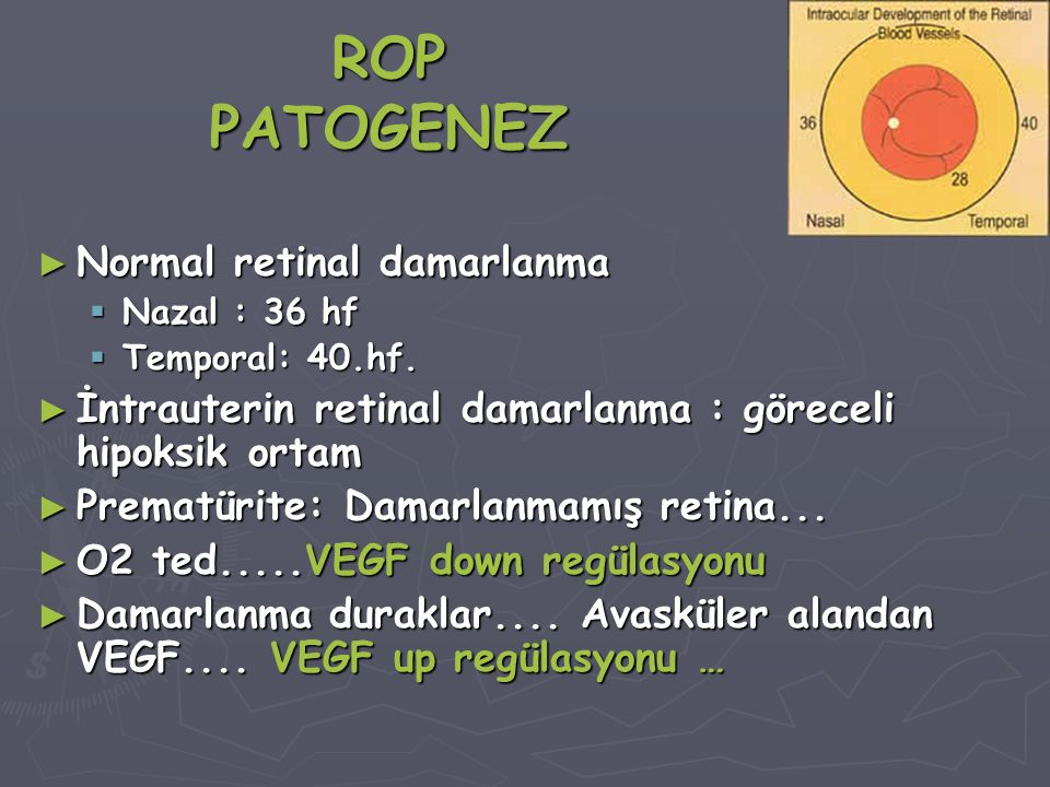 ROP PATOGENEZ Normal retinal damarlanma