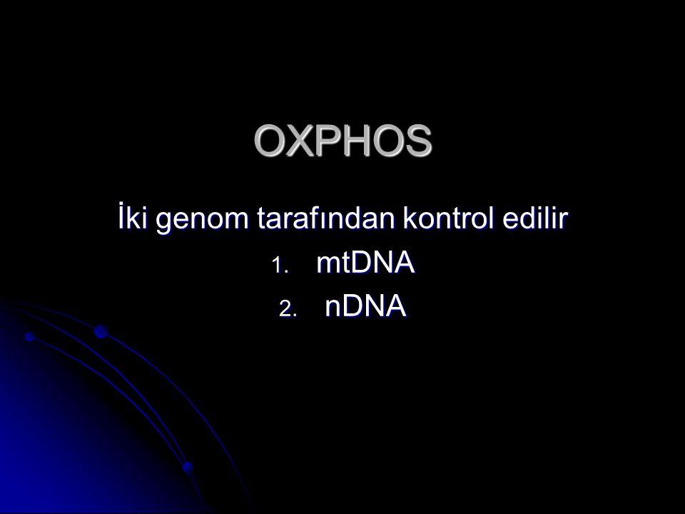 İki genom tarafından kontrol edilir