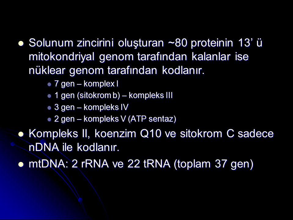 Kompleks II, koenzim Q10 ve sitokrom C sadece nDNA ile kodlanır.