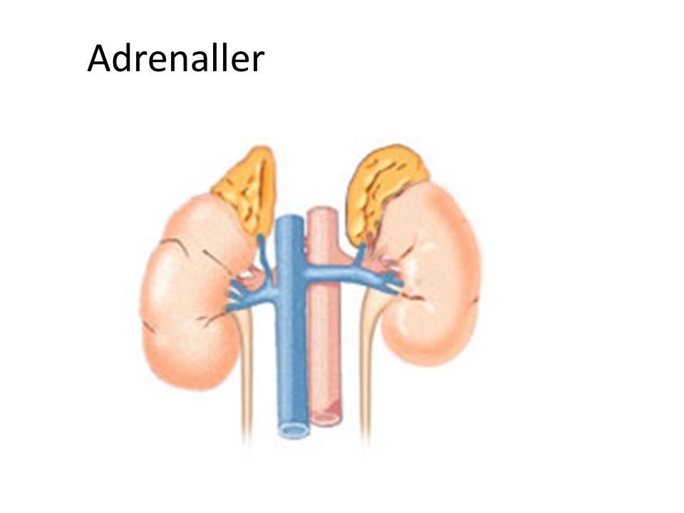Adrenaller