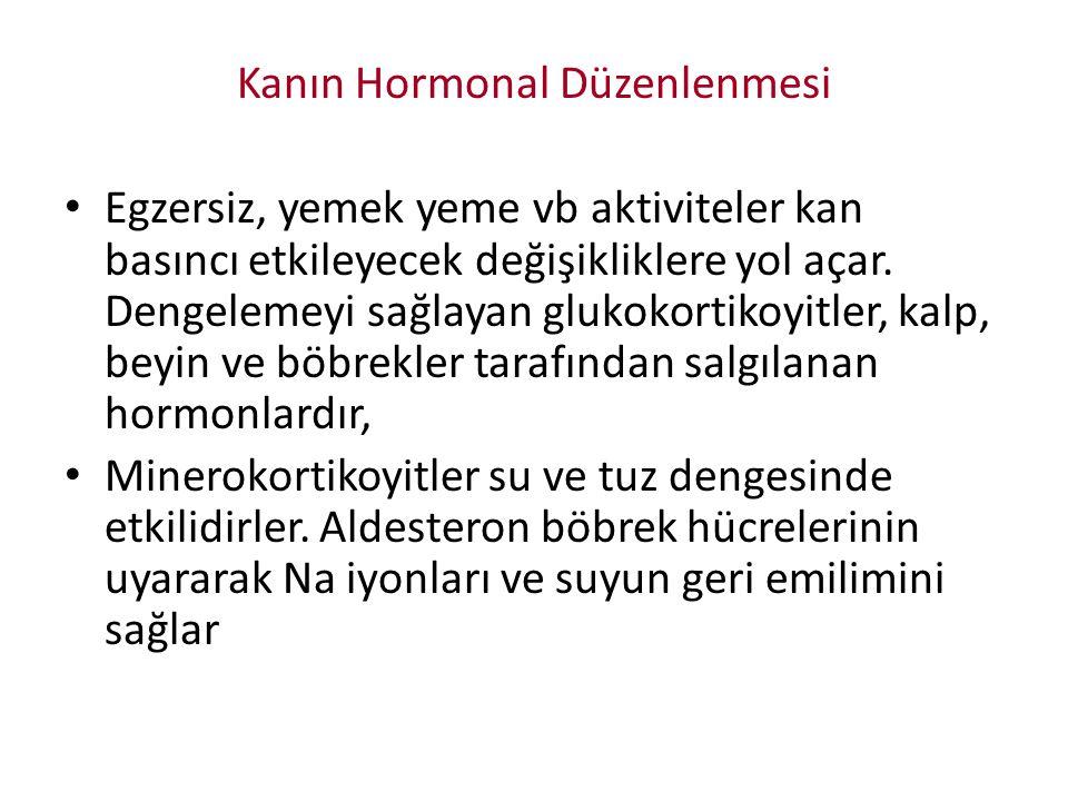 Kanın Hormonal Düzenlenmesi