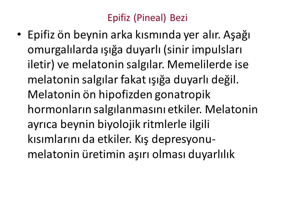Epifiz (Pineal) Bezi