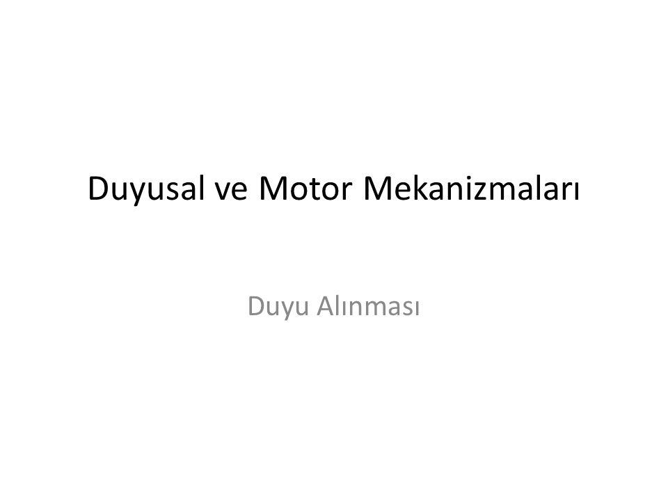Duyusal ve Motor Mekanizmaları