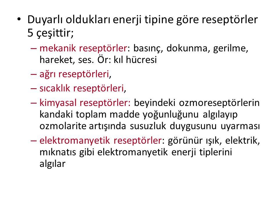 Duyarlı oldukları enerji tipine göre reseptörler 5 çeşittir;