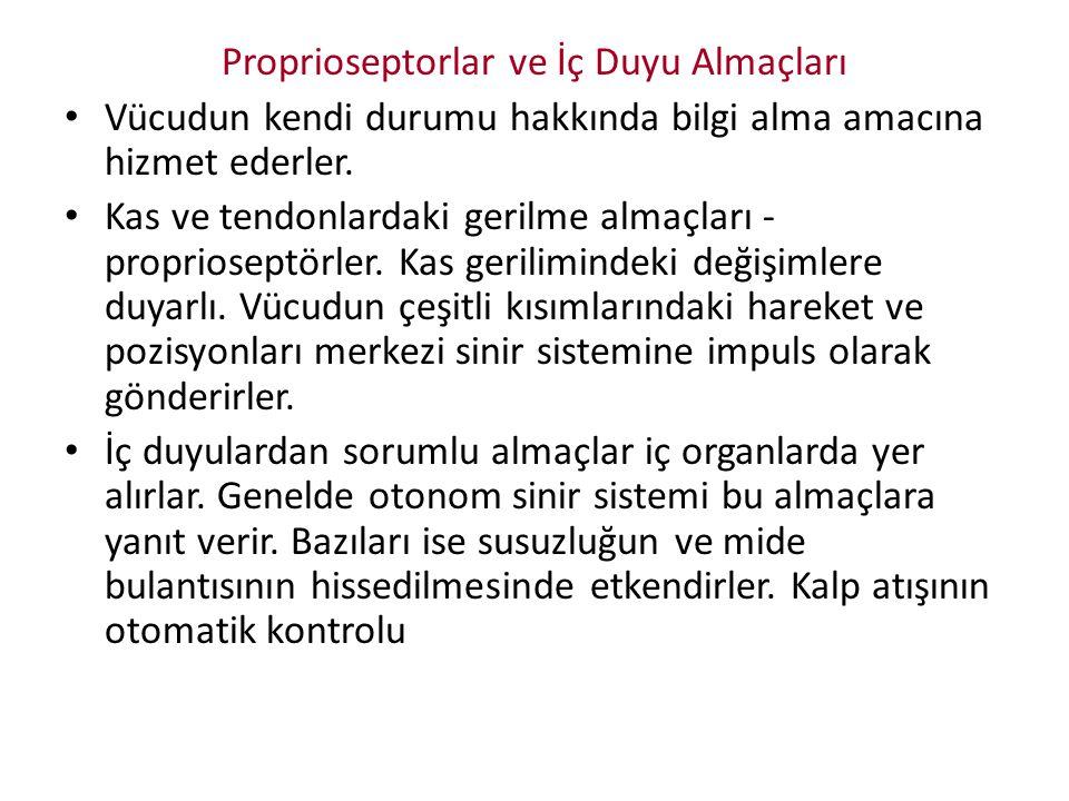 Proprioseptorlar ve İç Duyu Almaçları