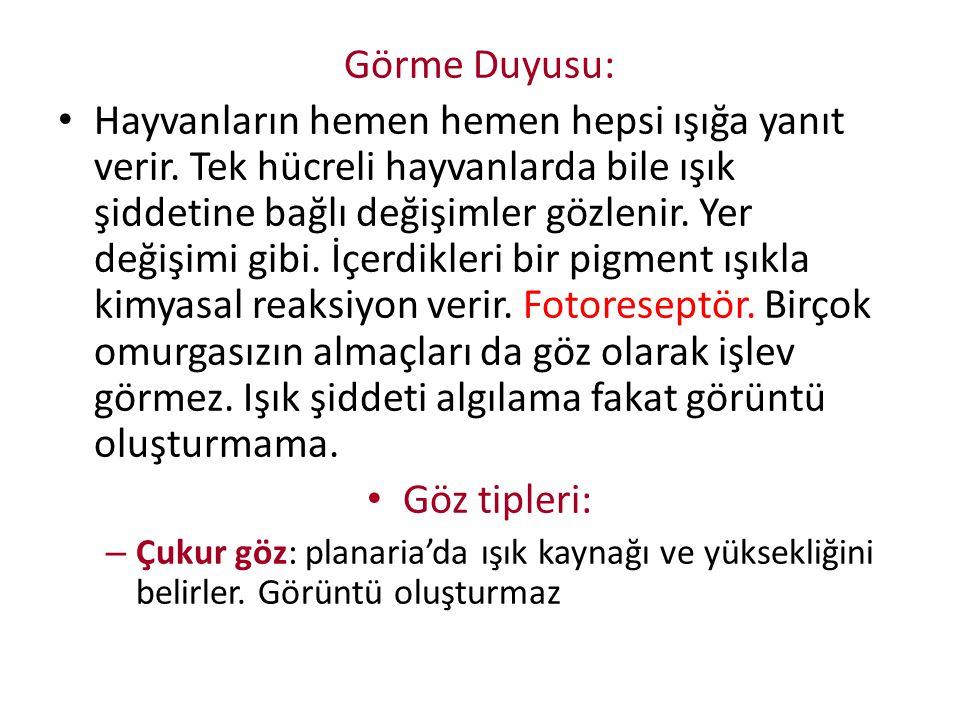 Görme Duyusu: