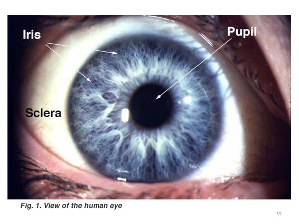 Gözbebeği (pupil) ışığın girdiği kısım