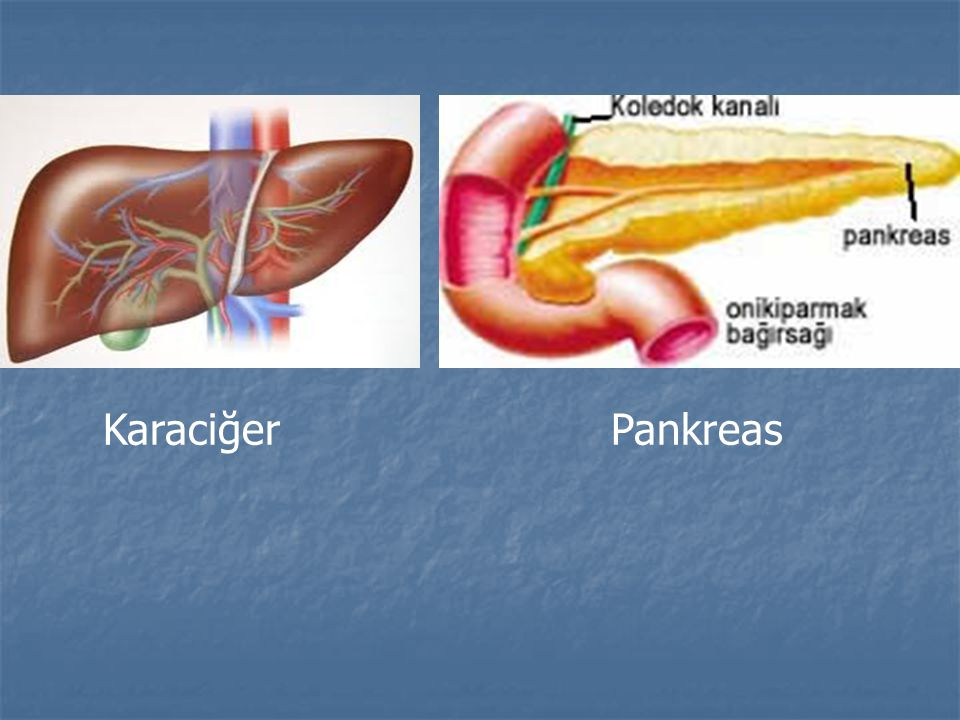Karaciğer Pankreas