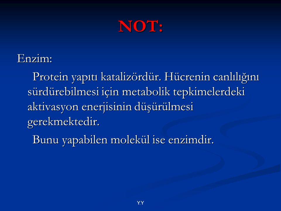 NOT: Enzim: