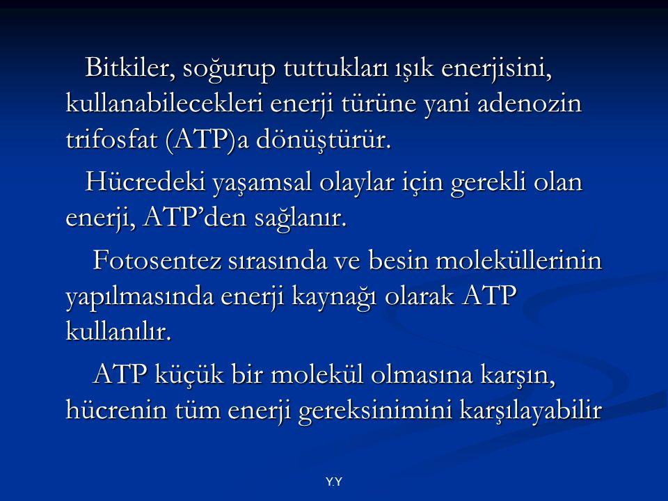 Hücredeki yaşamsal olaylar için gerekli olan enerji, ATP'den sağlanır.