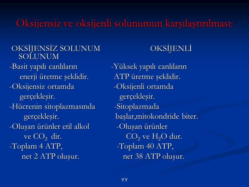 Oksijensiz ve oksijenli solunumun karşılaştırılması: