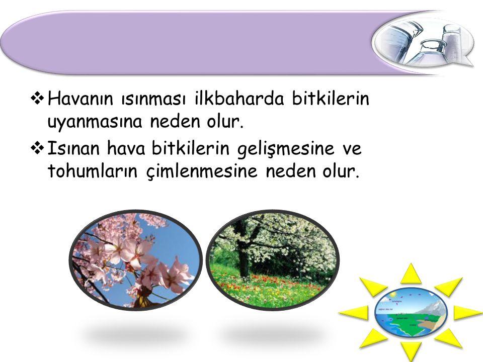 Havanın ısınması ilkbaharda bitkilerin uyanmasına neden olur.