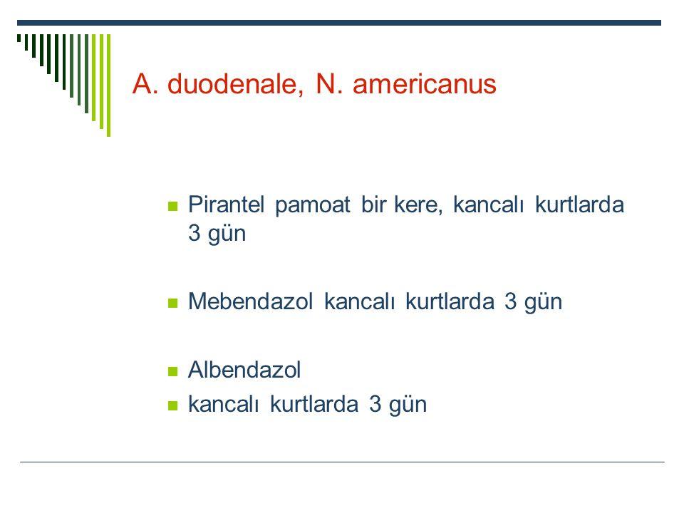 A. duodenale, N. americanus